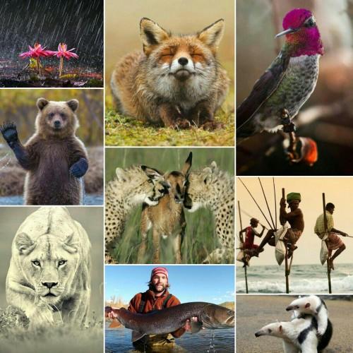 نشنال جئوگرافیک National Geographic
