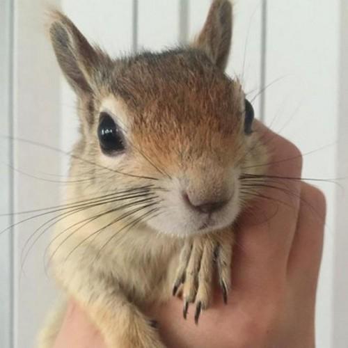 کانال تلگرام squirrel_pet