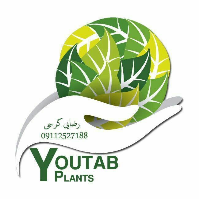 کانال گیاهان زینتی یوتاب