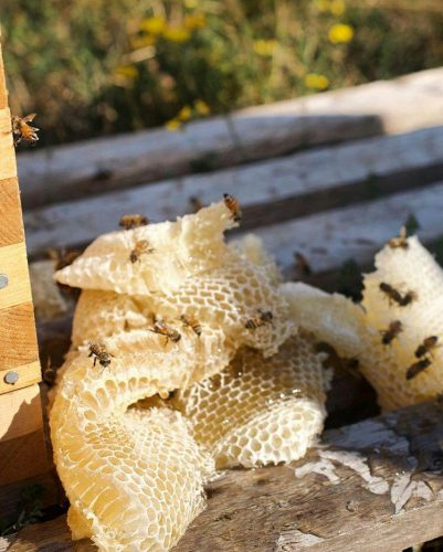 کانال تلگرام عسل طبیعی سردشت ( گراوان )