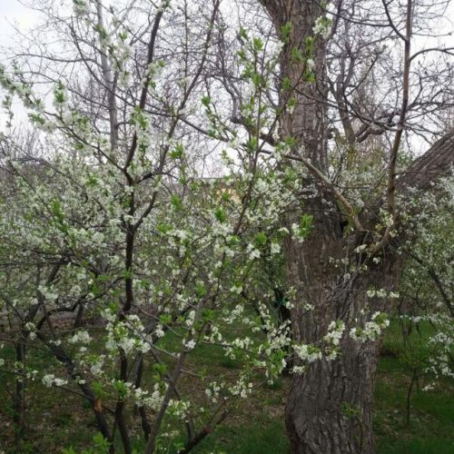 خرید و فروش ملک در شهر زیبای شهمیرزاد