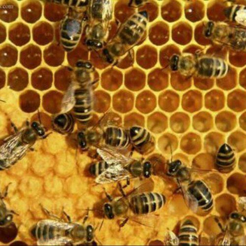 کانال ژله رویال و عسل طبیعی