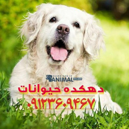کانال تلگرام دهکده حیوانات