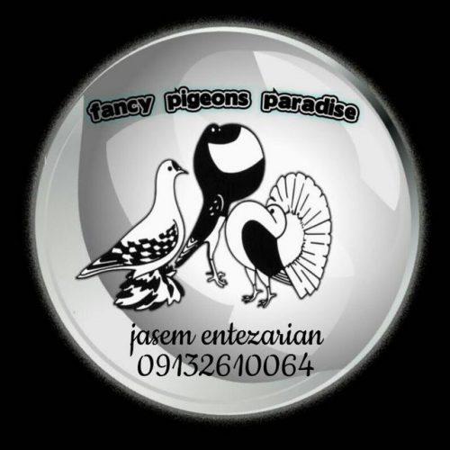 کانال تلگرام بهشت کبوتران زینتی