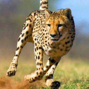 کانال دنیای حیوانات و شگفتیها