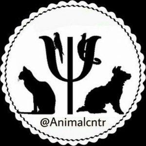 کانال فروشگاه حیوانات
