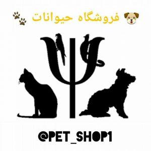 کانال 🐶 فروشگاه حیوانات 🐾