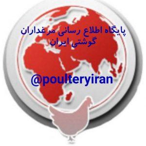 کانال پایگاه اطلاع رسانی مرغداران گوشتی ایران