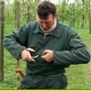 کانال آموزش پیوند درختان