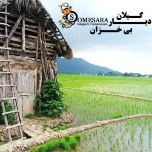 کانال ☘️ Somesara
