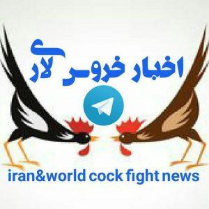 کانال اخبار خروسبازی ایران و جهان 🇮🇷