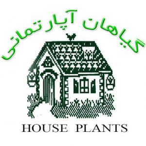کانال گیاهان آپارتمانی House Plants