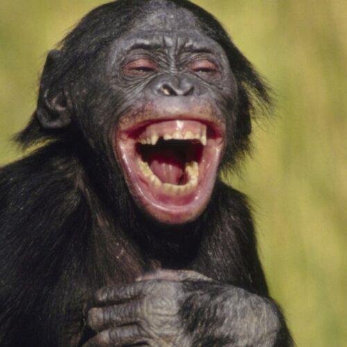کانال طنز میمون 🐒