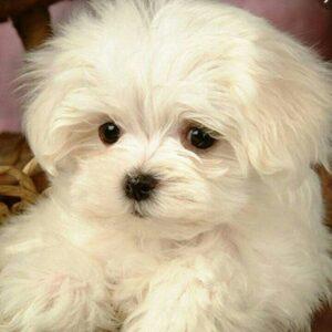 کانال واگذاری و فروش سگ وگربه