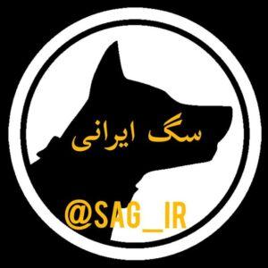 کانال سگ ایرانی   خرید و فروش سگ